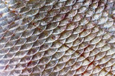 Scales of fish — Stock Photo