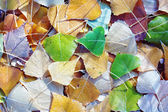 Autumn foliage — Stock Photo