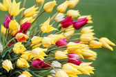 Field tulips. — Stock Photo