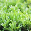 Abstract plant background — Stock Photo #7379089