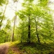 Gold Sunlight in the Forest — Stock Photo