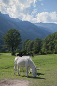 Donkey and his Cub (Carinthia, Austria) — Stock Photo