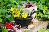 Léčivé byliny v třecí misce, bylinné medicíně — Stock fotografie