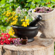 Healing herbs in mortar, herbal medicine — Stock Photo