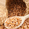 Wheat grains in basket and in wooden spoon - Stock Photo