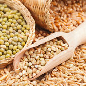 Green buckwheat, wheat, oat and mung - Cereal Grains and beans — Stock Photo
