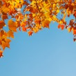 Autumn leaves on blue sky, border frame — Stock Photo