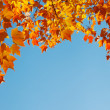 Autumn leaves on blue sky, border frame — Stock Photo #25388243
