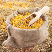 Sack of healing herbs and wooden scoop, herbal medicine — Stock Photo