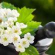 Mortar with blossom hawthorn, herbal medicine - Stock Photo