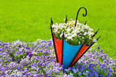 Pansy flowerbed with decorative umbrella — Stock Photo