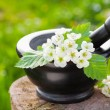 Mortar with blossom hawthorn, herbal medicine — Stock Photo