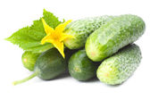 Cucumbers with yellow flower and leaves — Stock Photo