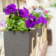 Flowerpot with flowers in outdoor cafe — Stock fotografie