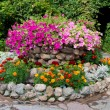 Flower bed with petunia and marigold — Stock Photo