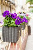 Saksı çiçekleri açık kafe ile — Stok fotoğraf