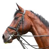 Голова лошади — Стоковое фото