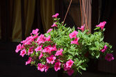 Flowerpot with flowers outdoors — Stock Photo
