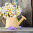 Watering can with summerdaisies flowers on wooden background — Stock Photo