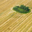 An aerial view of agricultural field — Stock Photo