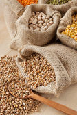 Hessian bag with wheat and sack with grains — Stock Photo