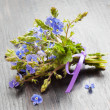 Small bunch of veronica germander flowers — Stock Photo