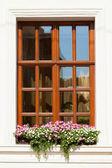 цветок поле под окном — Стоковое фото