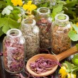 Herbs in glass bottles, dried healthy plants in wooden spoon — Stock Photo