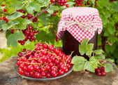 Red currants and jar of jam — Stock Photo
