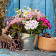Flowers in bucket and mortar with healing herbs — Stock Photo #48536639