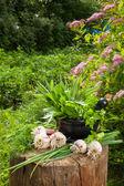 Fresh flavoring herbs and garlic on wooden stump in garden — Stock Photo