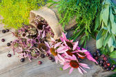 Bunches of healing herbs and coneflowers on wooden plank — Stock Photo