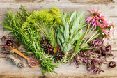 Bunches of healing herbs and coneflowers on wooden plank,top vie — Stock Photo
