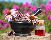 Mortar with coneflowers and vial with essentia oil in garden — Stock Photo