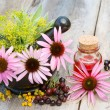 Coneflowers in mortar and vial with essentia oil in garden — Stock Photo #50103093