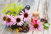 Coneflowers in mortar and vial with essentia oil in garden — Stock Photo