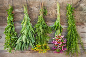 Bunches of healing herbs on wooden wall — Stock Photo