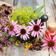 Coneflowers and dill in mortar, vial with essential oil on woode — Stock Photo #50924069