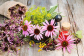 Coneflowers and dill in mortar, vial with essential oil on woode — Stock Photo