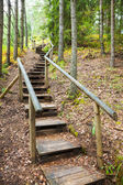 Stairway to mountains forest, nature trail in reserve — Stock Photo