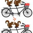 Squirrels in love on bicycle, vector — Stock Vector