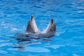 Dance of the dolphins — Stock Photo