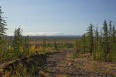 Nature of Taimyr — Stock Photo