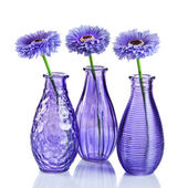Blue flowers in vases isolated on white — Stock Photo