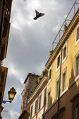 Streetlight and bird in Rome, Italy — Stock Photo