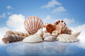 Sea shells in water against blue sky — Stock Photo