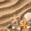 Royalty-Free Stock Photo: Sea shells on the sand