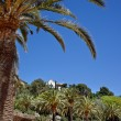 Green palm tree in Park Guell, Barcelona, Spain - Stock Photo