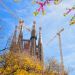 Sagrada Familia with blooming sakura in Barcelona, Spain - Stock Photo