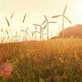 Wind generator turbines on sunset — Stock Photo